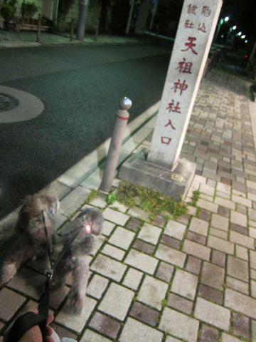トイプードルトリミング文京区フントヒュッテトイプードルデザインカットモデル東京トイプーモヒカンカット画像トイプードルシルバー犬ハーブパック59.jpg