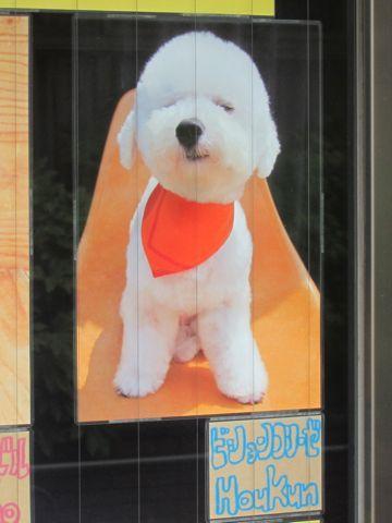 トリミング文京区フントヒュッテ東京ビションフリーゼカットスタイル画像トイプードルカットモデル関東ダックスサマーカットポメ柴犬カットペキニーズカット5.jpg