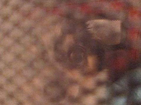 犬おあずかりペットホテル東京チワワ犬ホテル料金フントヒュッテ文京区チワワおさんぽ駒込チワワ画像都内ペットホテルおあずかりの様子犬のおさんぽ関東hundehutte16.jpg