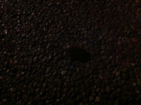 セミ せみ 蝉 幼虫 蝉の鳴き声 ミーンミーン セミの幼虫 セミ 羽化 セミ イラスト セミの図鑑 種類 セミ 公園 セミ どこにいる セミ 土の中に何年? セミの一生 1.jpg