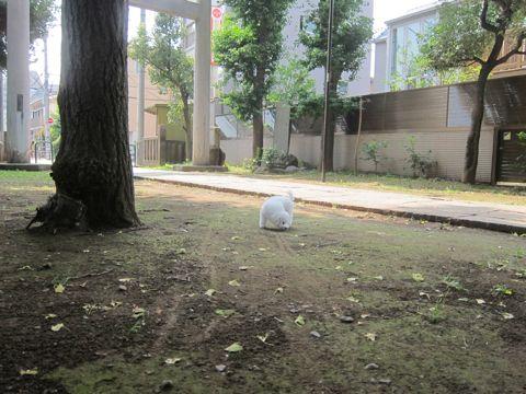 ビションフリーゼこいぬ子犬フントヒュッテ東京かわいいビションフリーゼ関東ビション文京区ビションフリーゼ画像ビションフリーゼおんなのこ姉妹メス子犬_270.jpg