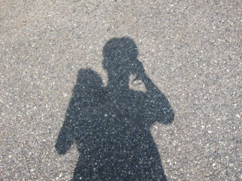 ビションフリーゼこいぬ子犬フントヒュッテ東京かわいいビションフリーゼ関東ビション文京区ビションフリーゼ画像ビションフリーゼおんなのこ姉妹メス子犬_297.jpg