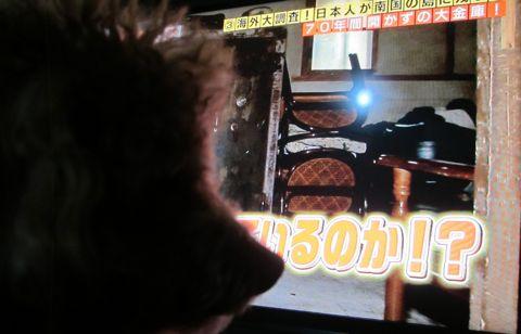 トイプードルペットホテル様子おさんぽ犬おあずかり文京区フントヒュッテ東京トイプードルトリミング画像トイプーモヒカンカット都内ペットホテル駒込29.jpg