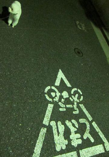 ペットホテル様子おさんぽ犬おあずかり文京区フントヒュッテ東京トイプードルトリミング画像トイプードルホワイト都内ペットホテル駒込小さいプードル関東7.jpg