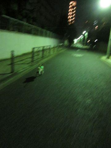 パグ画像かわいいパグ画像ペットホテル様子おさんぽ犬おあずかり文京区フントヒュッテ東京パグ駒込パグ夏弱い夏対策パグ飛行機パグ呼吸器官13.jpg