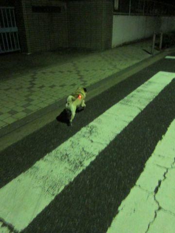 パグ画像かわいいパグ画像ペットホテル様子おさんぽ犬おあずかり文京区フントヒュッテ東京パグ駒込パグ夏弱い夏対策パグ飛行機パグ呼吸器官14.jpg
