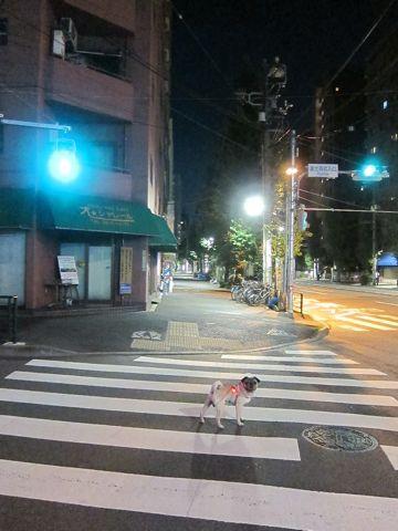 パグ画像かわいいパグ画像ペットホテル様子おさんぽ犬おあずかり文京区フントヒュッテ東京パグ駒込パグ夏弱い夏対策パグ飛行機パグ呼吸器官43.jpg