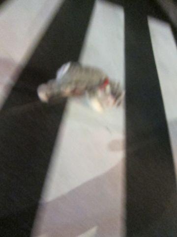 ペットホテル様子関東おさんぽ犬おあずかり都内フントヒュッテ東京ミニチュアシュナウザートリミング画像トイプードルテディベアカット駒込hundehutte56.jpg