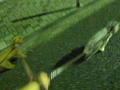 ペットホテル様子関東おさんぽ犬おあずかり都内フントヒュッテ東京ミニチュアシュナウザートリミング画像トイプードルテディベアカット駒込hundehutte68.jpg