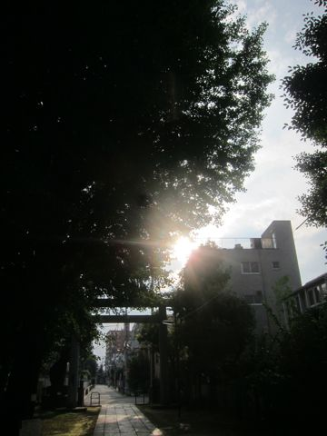 ビションフリーゼこいぬ子犬フントヒュッテ東京かわいいビションフリーゼ関東ビション文京区ビションフリーゼ画像ビションフリーゼおんなのこ姉妹メス子犬_548.jpg