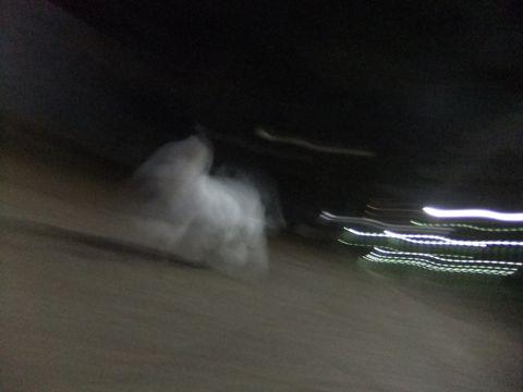 ビションフリーゼこいぬ子犬フントヒュッテ東京かわいいビションフリーゼ関東ビション文京区ビションフリーゼ画像ビションフリーゼおんなのこ姉妹メス子犬_609.jpg