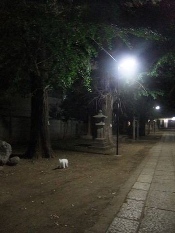 ビションフリーゼこいぬ子犬フントヒュッテ東京かわいいビションフリーゼ関東ビション文京区ビションフリーゼ画像ビションフリーゼおんなのこ姉妹メス子犬_610.jpg