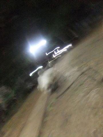 ビションフリーゼこいぬ子犬フントヒュッテ東京かわいいビションフリーゼ関東ビション文京区ビションフリーゼ画像ビションフリーゼおんなのこ姉妹メス子犬_611.jpg