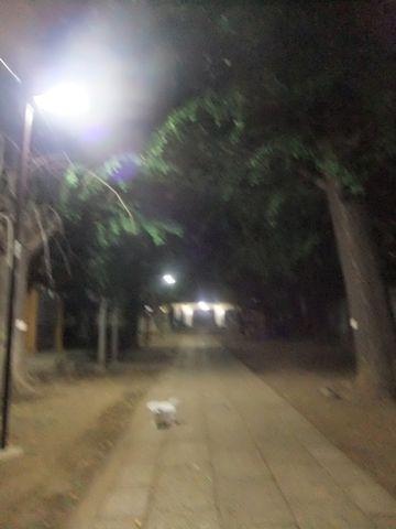 ビションフリーゼこいぬ子犬フントヒュッテ東京かわいいビションフリーゼ関東ビション文京区ビションフリーゼ画像ビションフリーゼおんなのこ姉妹メス子犬_612.jpg