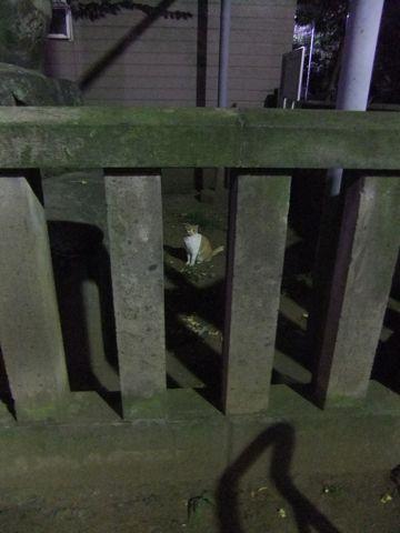 ビションフリーゼこいぬ子犬フントヒュッテ東京かわいいビションフリーゼ関東ビション文京区ビションフリーゼ画像ビションフリーゼおんなのこ姉妹メス子犬_619.jpg