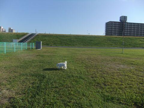 ビションフリーゼこいぬ子犬フントヒュッテ東京かわいいビションフリーゼ関東ビション文京区ビションフリーゼ画像ビションフリーゼおんなのこ姉妹メス子犬_647.jpg