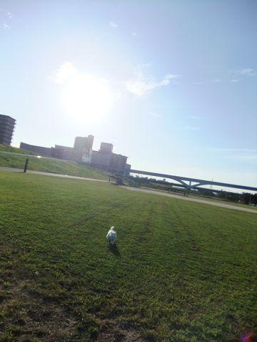 ビションフリーゼこいぬ子犬フントヒュッテ東京かわいいビションフリーゼ関東ビション文京区ビションフリーゼ画像ビションフリーゼおんなのこ姉妹メス子犬_654.jpg