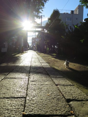 ビションフリーゼこいぬ子犬フントヒュッテ東京かわいいビションフリーゼ関東ビション文京区ビションフリーゼ画像ビションフリーゼおんなのこ姉妹メス子犬_746.jpg
