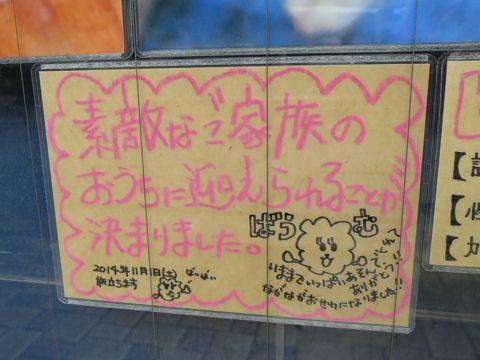 ビションフリーゼこいぬ子犬フントヒュッテ東京かわいいビションフリーゼ関東ビション文京区ビションフリーゼ画像ビションフリーゼおんなのこ姉妹メス子犬_828.jpg