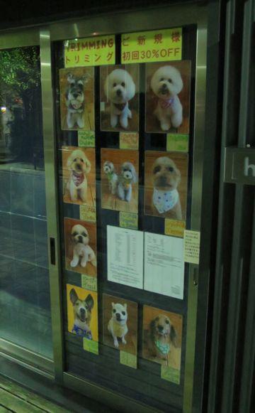トリミングモデル画像フントヒュッテ文京区犬カットモデル東京トイプードルカットスタイルビションフリーゼカット画像チワワトリミング都内シーズーカット駒込3.jpg