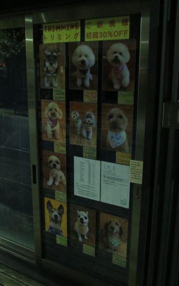 トリミングモデル画像フントヒュッテ文京区犬カットモデル東京トイプードルカットスタイルビションフリーゼカット画像チワワトリミング都内シーズーカット駒込4.jpg