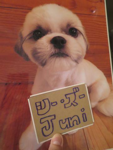 トリミングモデル画像フントヒュッテ文京区犬カットモデル東京トイプードルカットスタイルビションフリーゼカット画像チワワトリミング都内シーズーカット駒込5.jpg