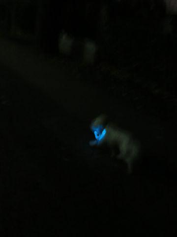 ホテル犬駒込フントヒュッテ東京ペットホテル文京区犬おあずかり様子おさんぽペットホテル料金ビションフリーゼトリミング画像ビションフリーゼカット都内41.jpg