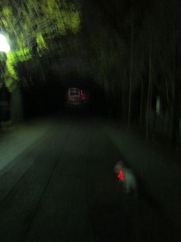 ホテル犬駒込フントヒュッテ東京ペットホテル文京区犬おあずかり様子おさんぽペットホテル料金ビションフリーゼトリミング画像ビションフリーゼカット都内43.jpg