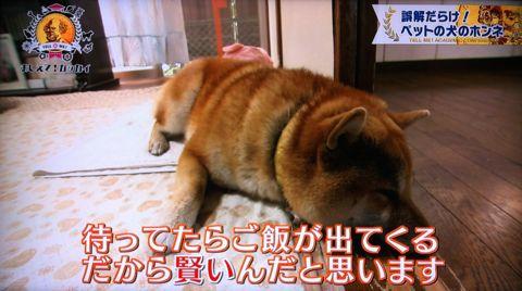 おしえて!ガッカイ ペットが何を考えているか知りたい! 種が違えばモノの認知の仕組みが異なるので完全に理解することはできません 日本動物心理学会員 11.jpg