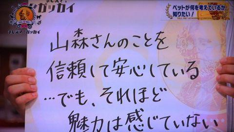 おしえて!ガッカイ ペットが何を考えているか知りたい! 種が違えばモノの認知の仕組みが異なるので完全に理解することはできません 日本動物心理学会員 15.jpg