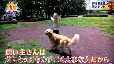 おしえて!ガッカイ ペットが何を考えているか知りたい! 種が違えばモノの認知の仕組みが異なるので完全に理解することはできません 日本動物心理学会員 26.jpg