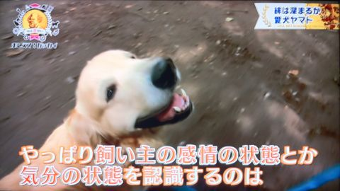 おしえて!ガッカイ ペットが何を考えているか知りたい! 種が違えばモノの認知の仕組みが異なるので完全に理解することはできません 日本動物心理学会員 27.jpg