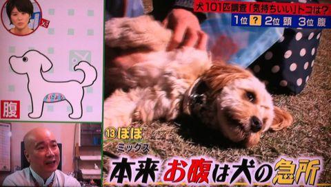 犬の気持ち いぬのきもち イヌのきもち 犬101匹調査「気持ちいい」トコは? 首 頭 腹 動物のツボに詳しい獣医師石野孝先生 犬は肩こりがひどい 犬のツボ 1.jpg