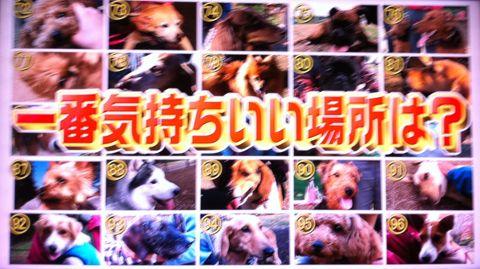 犬の気持ち いぬのきもち イヌのきもち 犬101匹調査「気持ちいい」トコは? 首 頭 腹 動物のツボに詳しい獣医師石野孝先生 犬は肩こりがひどい 犬のツボ 5.jpg