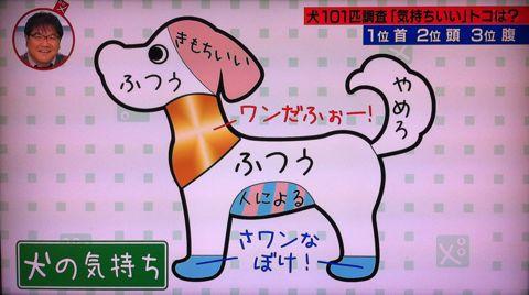 犬の気持ち いぬのきもち イヌのきもち 犬101匹調査「気持ちいい」トコは? 首 頭 腹 動物のツボに詳しい獣医師石野孝先生 犬は肩こりがひどい 犬のツボ 6.jpg