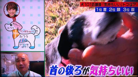 犬の気持ち いぬのきもち イヌのきもち 犬101匹調査「気持ちいい」トコは? 首 頭 腹 動物のツボに詳しい獣医師石野孝先生 犬は肩こりがひどい 犬のツボ 9.jpg