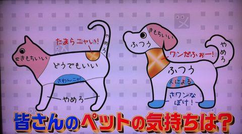 犬の気持ち いぬのきもち イヌのきもち 犬101匹調査「気持ちいい」トコは? 首 頭 腹 動物のツボに詳しい獣医師石野孝先生 犬は肩こりがひどい 犬のツボ 11.jpg