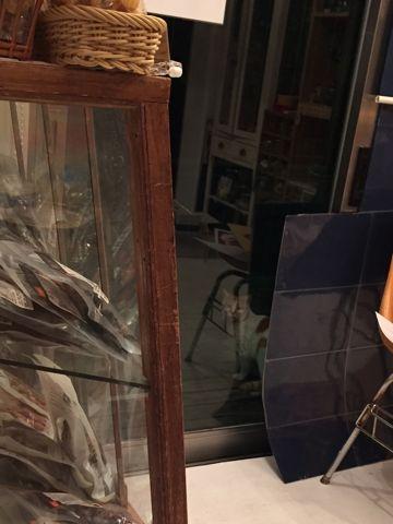 温泉 トリミング トリミングサロン 東京 文京区 本駒込 フントヒュッテ 都内 犬の温泉 犬用天然温泉入浴剤 アニマー湯プラス ペット入浴剤 ANIMARYU BATHSALT 46.jpg