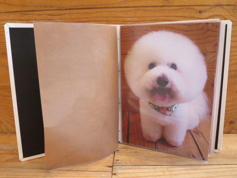 フントヒュッテトリミング画像DOGカットスタイルカタログ東京犬カットモデル都内ビションフリーゼカット画像トイプードルカットモデル文京区Lookbookルックブック_5.jpg
