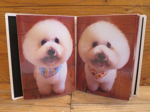 フントヒュッテトリミング画像DOGカットスタイルカタログ東京犬カットモデル都内ビションフリーゼカット画像トイプードルカットモデル文京区Lookbookルックブック_6.jpg