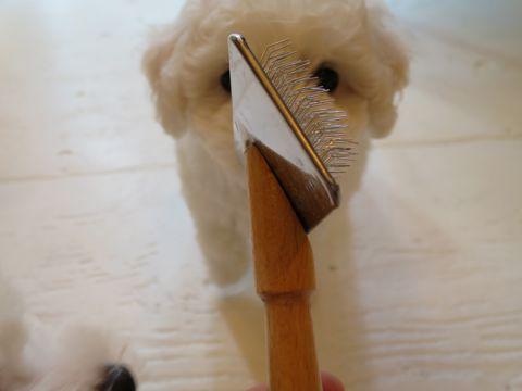 ビションフリーゼフントヒュッテビションフリーゼ子犬こいぬ父チャンピオン犬チャンピオン血統ビション子犬おんなのこ東京ビションフリーゼ画像性格かわいい_192.jpg