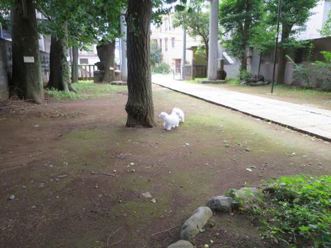 ビションフリーゼフントヒュッテビションフリーゼ子犬こいぬ父チャンピオン犬チャンピオン血統ビション子犬おんなのこ東京ビションフリーゼ画像性格かわいい_461.jpg