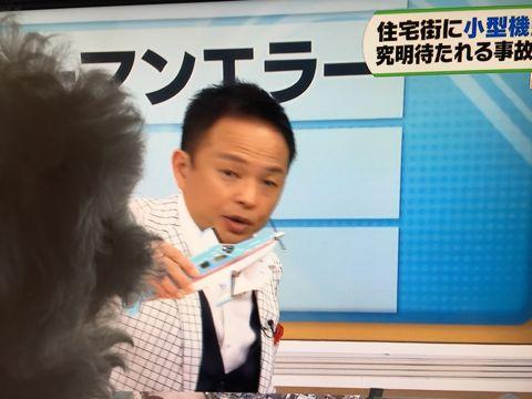 ビションフリーゼフントヒュッテビションフリーゼ子犬こいぬ父チャンピオン犬チャンピオン血統ビション子犬おんなのこ東京ビションフリーゼ画像性格かわいい_553.jpg