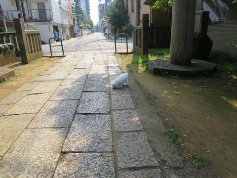 ビションフリーゼフントヒュッテビションフリーゼ子犬こいぬ父チャンピオン犬チャンピオン血統ビション子犬おんなのこ東京ビションフリーゼ画像性格かわいい_573.jpg