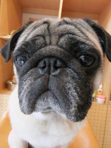 P-ball国産犬おやつピーボール無添加無着色保存料不使用手作り犬おやつ東京フントヒュッテ文京区駒込手作り自然食P-ball原材料カロリー栄養価画像hundehutte国産本物マグロ_3.jpg