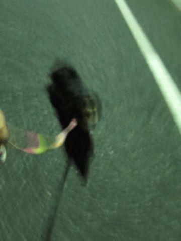 ダックスペットホテル様子おさんぽ犬おあずかり文京区フントヒュッテ東京ダックストリミング画像都内ペットホテル駒込カニヘンダックスカニンヘンダックス34.jpg