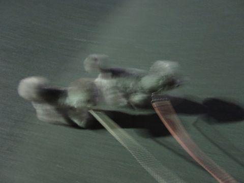 トイ・プードルペットホテル様子おさんぽ犬おあずかり文京区フントヒュッテ東京トイプードルトリミング画像都内ペットホテル駒込トイプーカットシルバー68.jpg