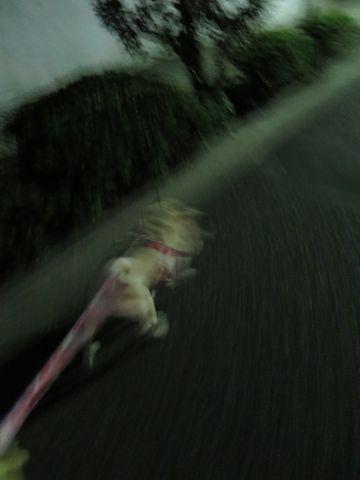 パグペットホテル様子おさんぽ犬おあずかり文京区フントヒュッテ東京パグトリミング画像都内ペットホテル駒込パグ夏注意パグ夏対策短頭種とは45.jpg