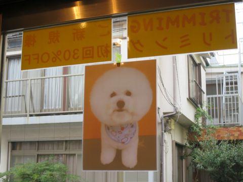 トリミングカットスタイル画像フントヒュッテ文京区犬カットモデル東京トイプードルカットスタイルビションフリーゼカット画像トイプーのビションカット駒込_1.jpg