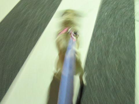 パグペットホテル様子おさんぽ犬おあずかり文京区フントヒュッテ東京パグトリミング画像都内ペットホテル駒込パグ夏注意パグ夏対策短頭種とは_2_24.jpg